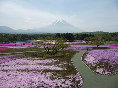 100518-富士芝桜まつり-35
