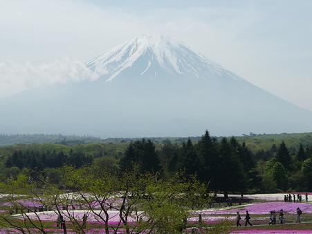100518-富士芝桜まつり-37