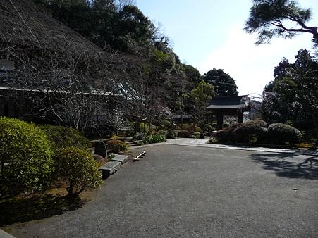 110225-海蔵寺 (7)