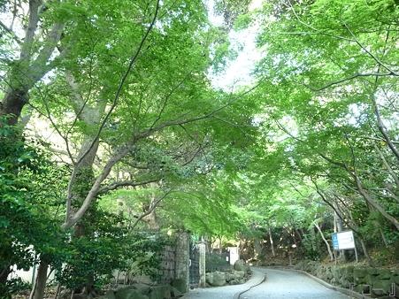 110519-鎌倉文学館 (12)