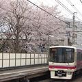 写真: 代田橋駅の桜