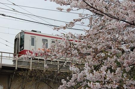 東武電車と桜