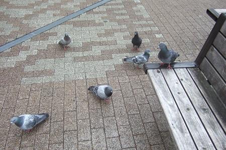 鳩に包囲される3