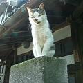 Photos: PICT0146+1 駒猫3号