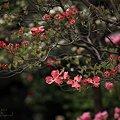 Photos: 花の隊列
