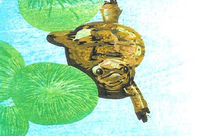 ニホンイシガメ