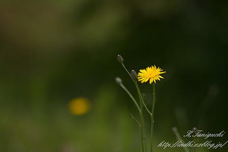 あぜ道に咲く花