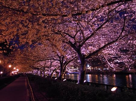 夜桜2010_08