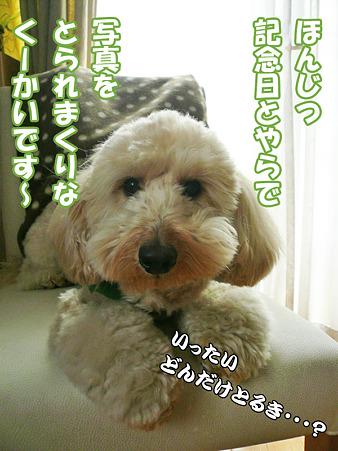 くーかい家族記念日二周年 1