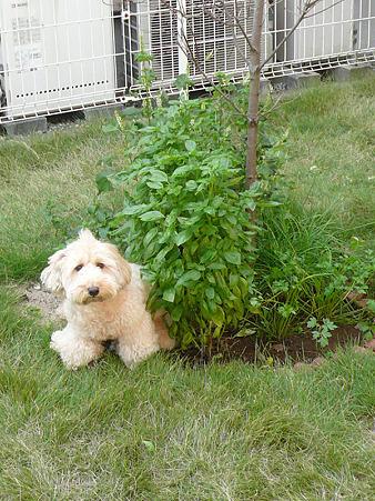 小庭でくーかい 2