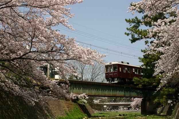 阪急甲陽線の桜