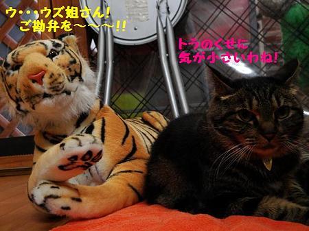 ウズ&トラ子