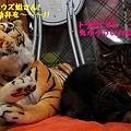 Photos: ウズ&トラ子