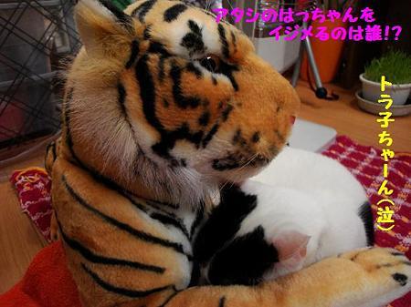 はっちゃん&トラ子4