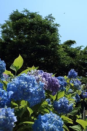 青空より青く_1424