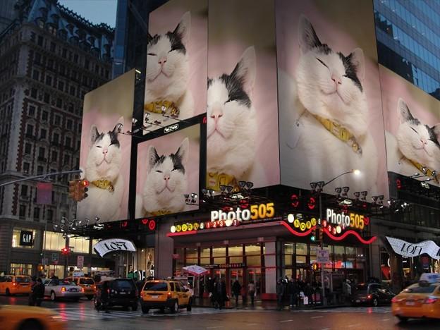 写真: えびす猫大人気