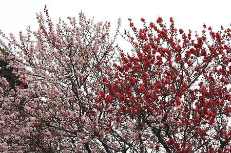 2010.03.31 和泉川 モモ