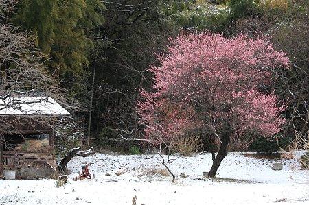 2011.02.12 和泉川 柿と梅に納屋