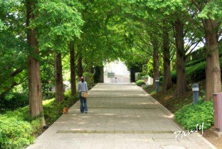 メタセコイアの坂道・・山手イタリア山庭園・・14