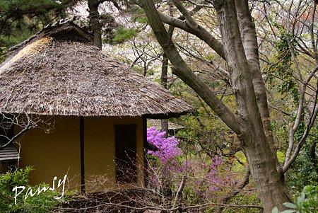 ミツバツツジの咲く・・草庵・・3