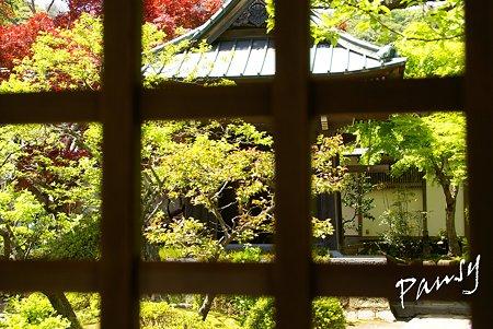 新緑の海蔵寺・・2