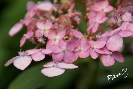 別子テマリ・・pink・・