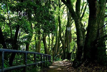 木立の小径・・小田原城址公園にて・・2