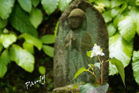 風待月の東慶寺・・3