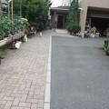Photos: この広~~い敷地内を自由に駆け回る柚子