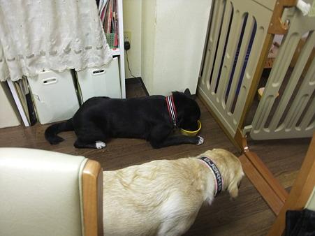 銀ちゃんが寝そべってご飯食べる姿に感動していたchicoさん
