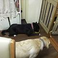 Photos: 銀ちゃんが寝そべってご飯食べる姿に感動していたchicoさん
