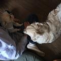 Photos: 先住ワンコとの相性も問題なし