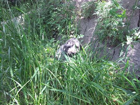 草に埋もれながらも食べる春馬