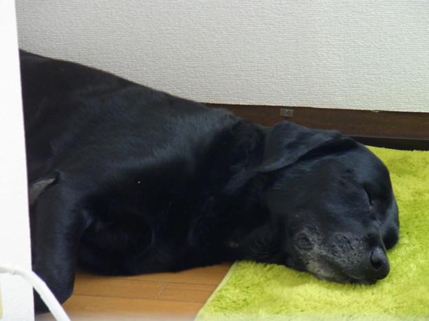 Photos: 気持ち良さそうに寝ています