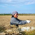 Photos: ハサがけ'09 (19)