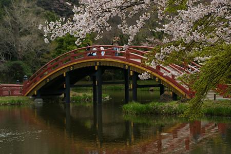 桜に染まる、阿字池の太鼓橋!(100403)