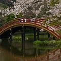 Photos: 桜に染まる、阿字池の太鼓橋!(100403)