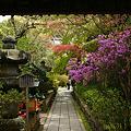 Photos: 春色の参道、安国論寺!(100411)