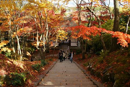 紅葉の参道と山門!(101124)