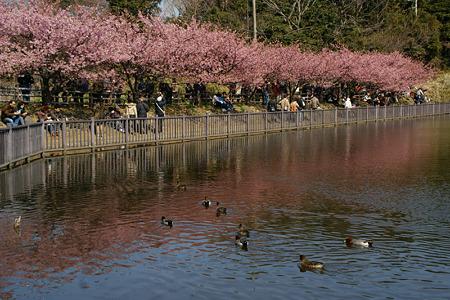 桜の花見!(110226)