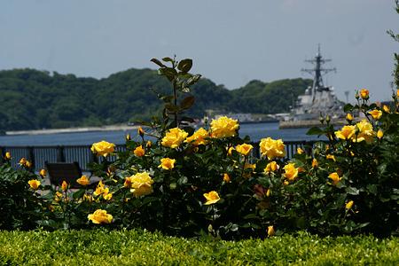薔薇と海軍
