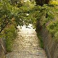 Photos: ~春の小川~