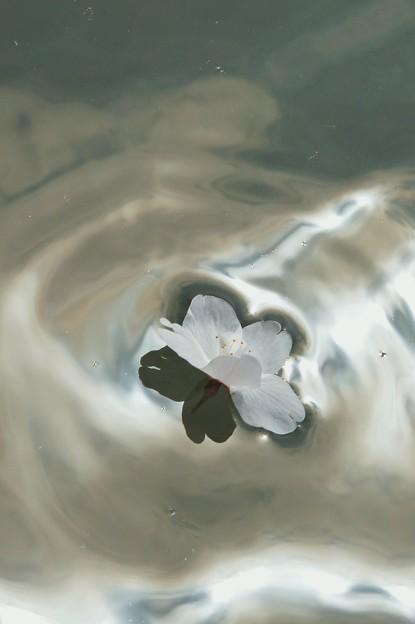 輝く水の上で・・・