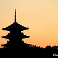 Photos: 茜色の五重塔