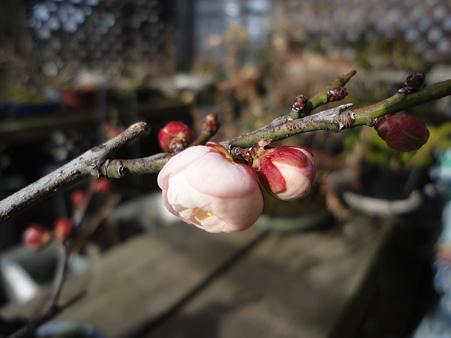 春めいて~(⌒~⌒)