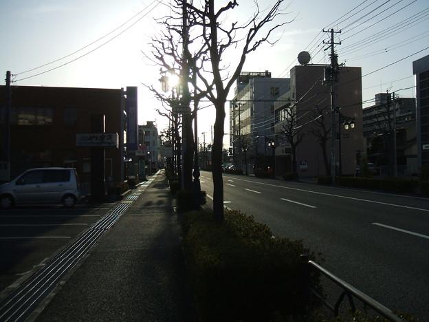 Photos: さくら通り - 桑野 - 2