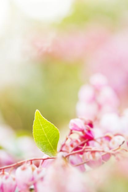 新芽の喜び