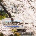 Photos: 春行き
