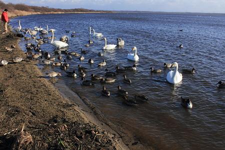 ウトナイ湖 IMG_5537