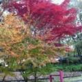 写真: 2010112719080000